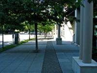 Podwójny szpaler drzew na nieszerokim chodniku