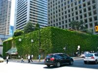 Parking opleciony zielonym pnączem